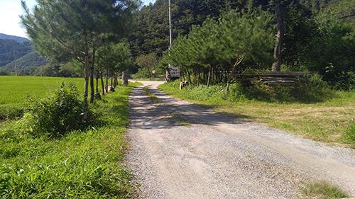 forest-2716-500.jpg